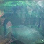 Ryby w akwarium.