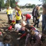 Uczniowie sadzą cebulki żonkili.