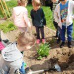 Dzieci sadzą roślinki.