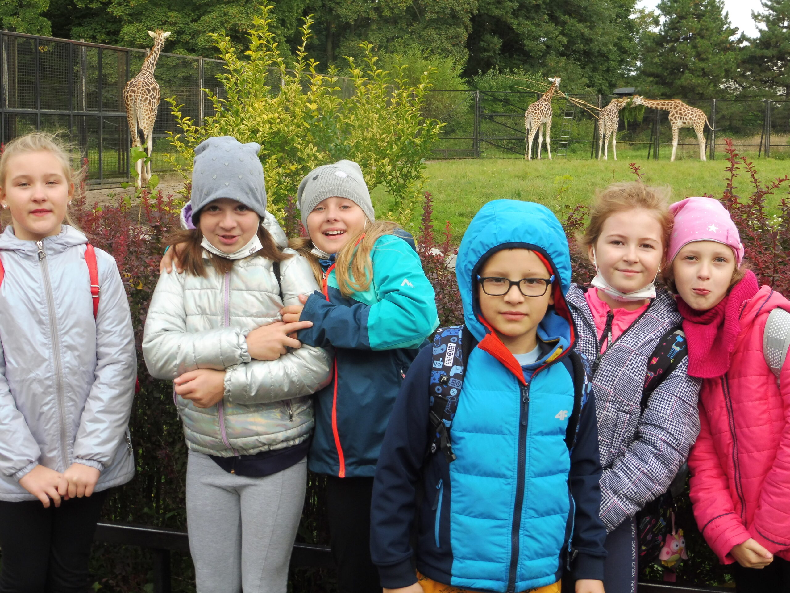 i jeszcze więcej żyraf